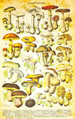 Different mushrooms set — Stock Photo