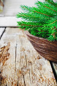 Green branches of fir — Stock Photo