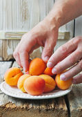Harvest of apricots — Stock Photo