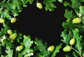 acorns on the black background — Stock Photo