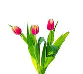 Fleurs de printemps. — Photo