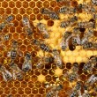 Close up view of the working bees on honeycomb — Stock Photo #61245557