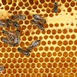 Close up view of the working bees on honeycomb — Stock Photo #61245579