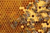 Close-up vista das abelhas trabalhando em favo de mel — Fotografia Stock