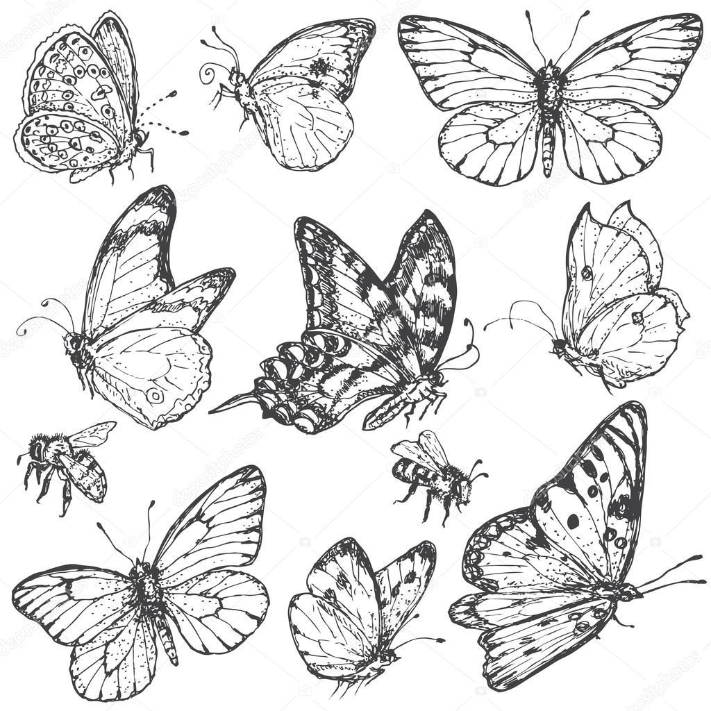 flying butterfly drawing wild turkey clip art free Wild Turkey Clip Art Black and White