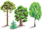Types of trees — Stock Vector