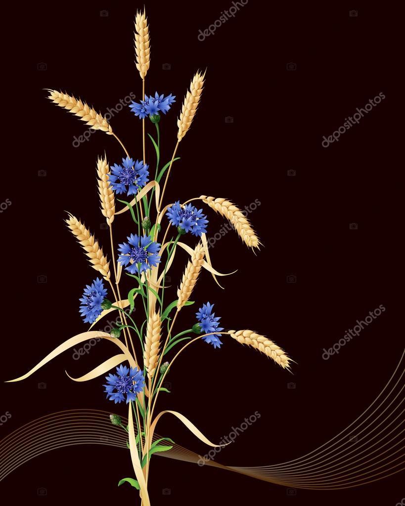 Bouquet de bleuets et pis de bl sur fond noir image vectorielle valiva 60281765 - Image epis de ble ...