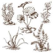 Hand drawn algae sketch — Stock Vector