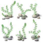 Hornwort and pebbles — Stock Vector