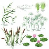 Wetland Plants Set — Stock Vector