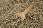 Spoon in hemp seeds — Stock Photo