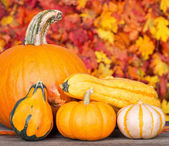 Pumpkin and Gourds — Stock Photo