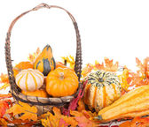 Fall Gourds in a Basket — Stock Photo