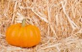 Pumpkin on Straw Bale — Stock Photo