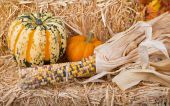 Arrangement of Squash, Pumpkin and Corn — Stock Photo