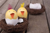 Two Easter Egg Chicks — Stock Photo