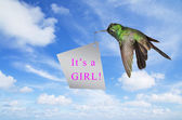 Baby shower announcement its a girl with hummingbird carrying a  — Fotografia Stock