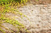 Wall of meandering green plant background — Stock Photo