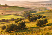 Rural landscape of Tuscany on a hazy sunny morning — Stock Photo