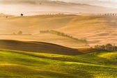 Rural landscape of Tuscany on a hazy sunny morning — Stock Photo