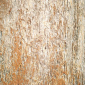 Old patterns of nature on wood, texture — Zdjęcie stockowe