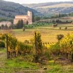 Mosteiro Sant'Antimo nas vinhas de Brunello, perto Montalc — Fotografia Stock  #57827477