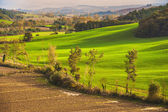 Green fields and forest in the landscape — 图库照片