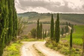 Cypress road in the landscape of Tuscany — Stock Photo