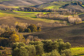 Beautiful fields and forests in the landscape of Tuscany — Stock Photo