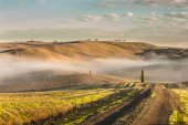 Tuscan cypress trees on the fields in a fantastic light of the r — Stock Photo