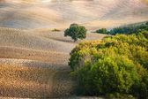 Тосканского пейзажа в осенние цвета, Италия — Стоковое фото