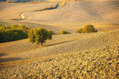 Tuscan landscape in autumnal colors, Italy — Stock Photo