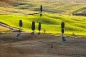 Schöne und wunderbare Farben grün Frühling Landschaft des Tus — Stockfoto