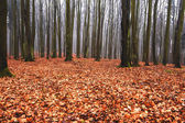 Enchanted and magical forest landscape — Stock Photo