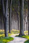 Dark Forest Path — Stock Photo