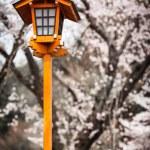 Sakura Lantern — Stock Photo #56051371