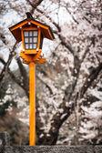 Sakura Lantern — Stok fotoğraf