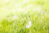 Feather in the Grass — Stock Photo