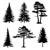 Coniferous trees silhouettes, collectio — Stock Vector