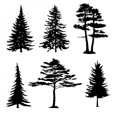 Coniferous trees silhouettes, collectio