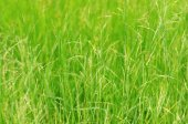 Green grass field background — Stock Photo
