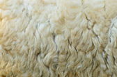 Sheep fur texture — Stock Photo