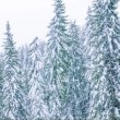 Snow Mountain with pine forest — Stock Video #72474397