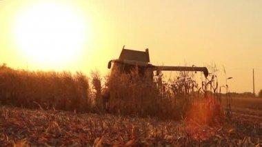 Combine Harvesting Corn — Stock Video