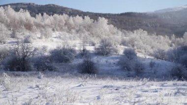 Calm Nature Frozen Trees — Stock Video