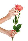 Mujeres manos sosteniendo rosa — Foto de Stock