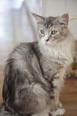 Gato lindo close-up — Fotografia Stock
