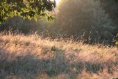 Sun haze on meadow with trees and grass — Stock Photo