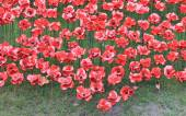 Blood Swept Lands and Seas of Red Poppies at Tower of London — Stock Photo
