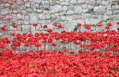 Poppies at Tower of London- Blood Swept Lands and Seas of Red — Stock Photo